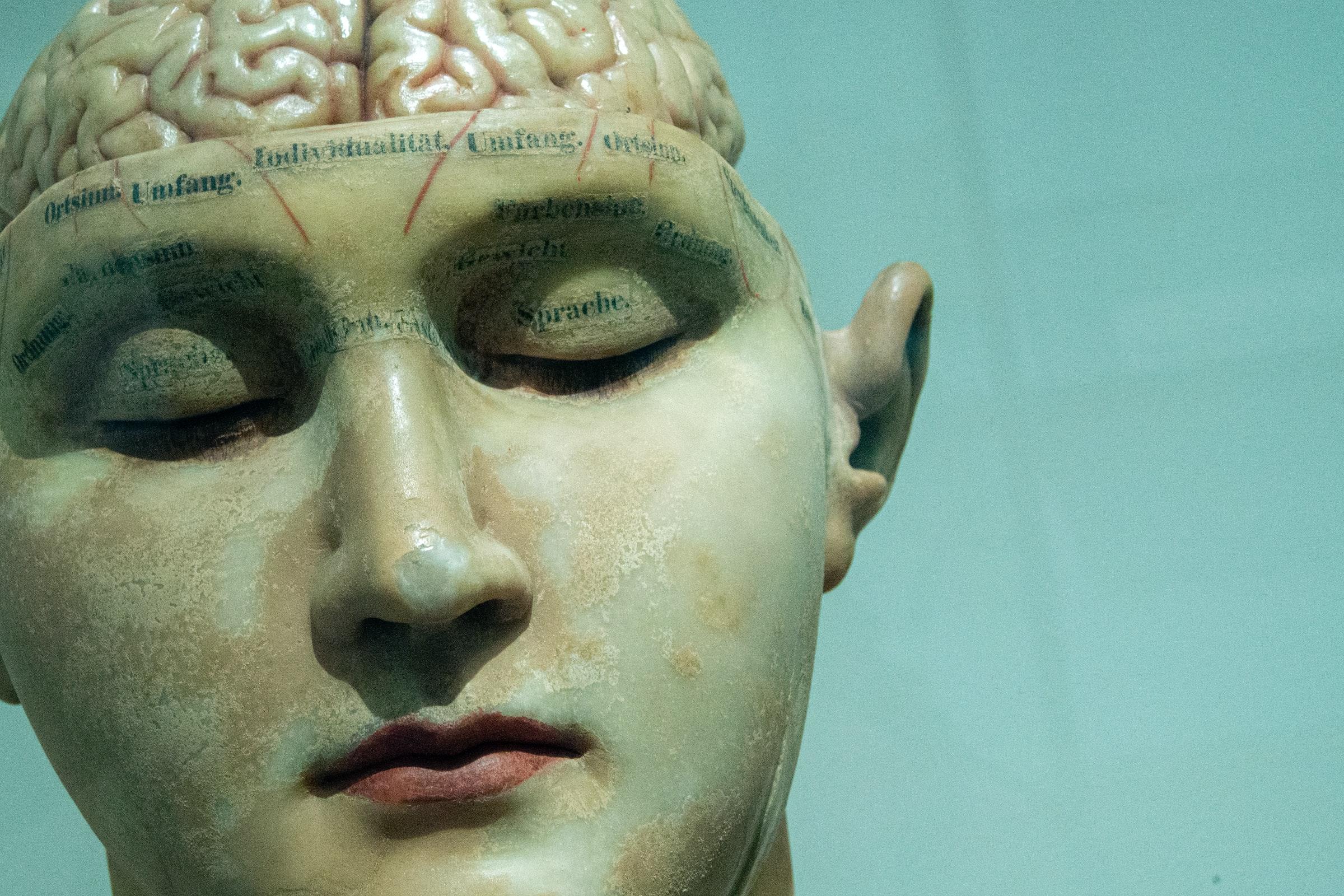 Maquette de visage avec cerveau apparent.